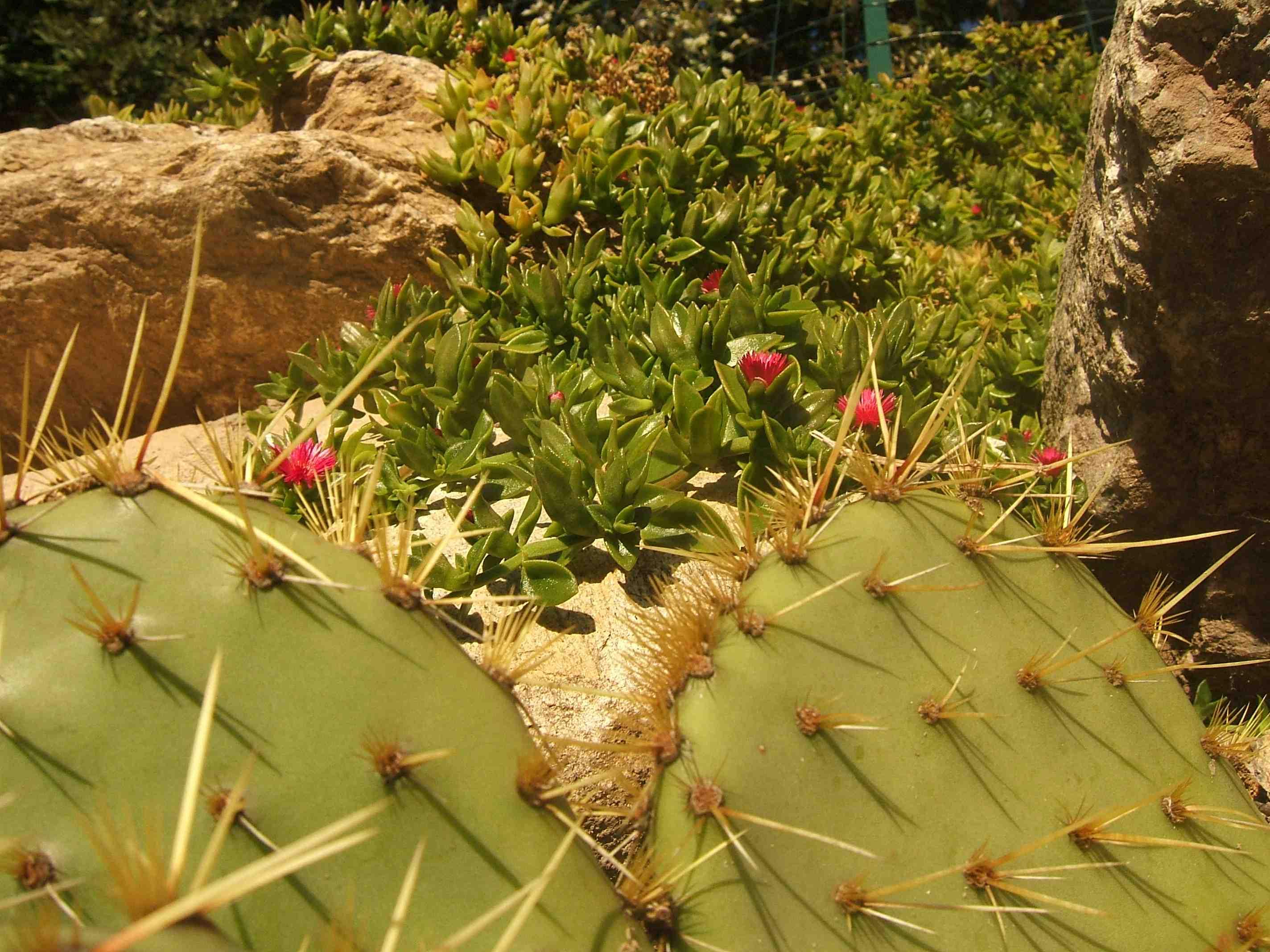 cactusetplantegrassewwwnidishunblogfr.jpg